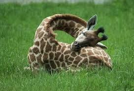 cuanto duermen los animales