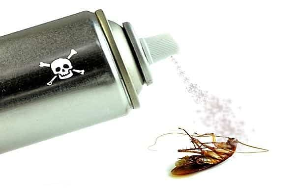 productos anti piojos