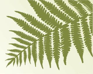 Remedios naturales con plantas: Calaguala