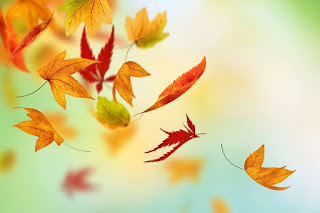 cabello en otoño