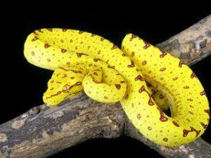 Veneno de serpiente: Beneficios para tu piel